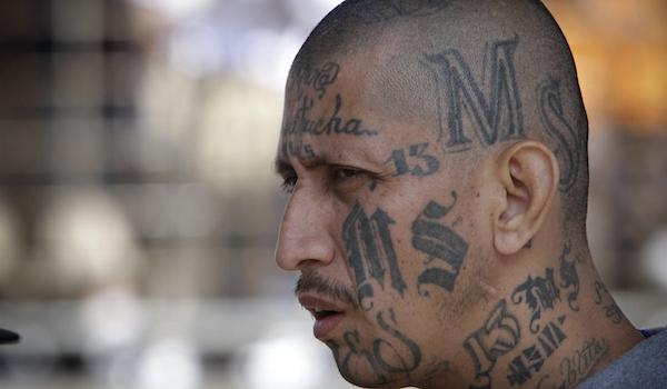 MS-13 gang leader arrest domestic terror